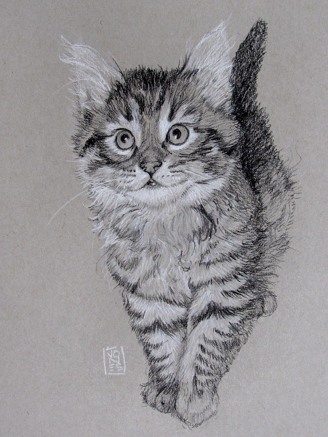 Cat Drawing - Thing One by Debra Jones