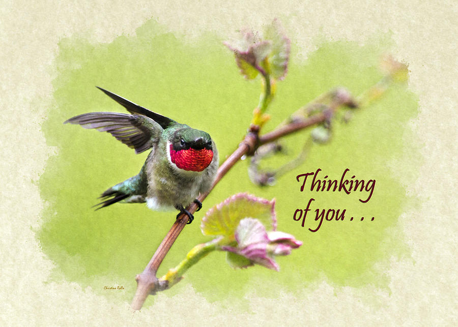 Thinking of you hummingbird wing and a prayer greeting card mixed thinking of you mixed media thinking of you hummingbird wing and a prayer greeting card m4hsunfo