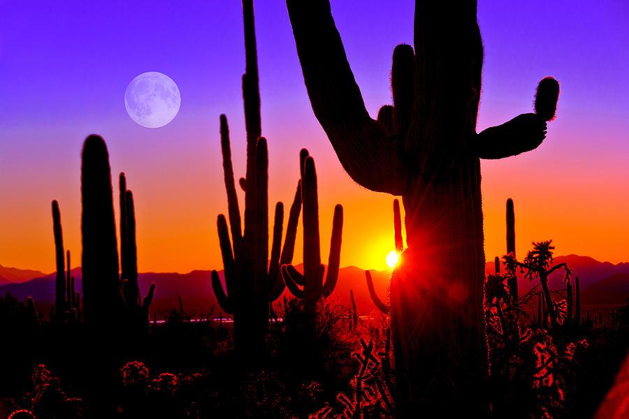 Third Sunset at Saguaro by John Hoffman