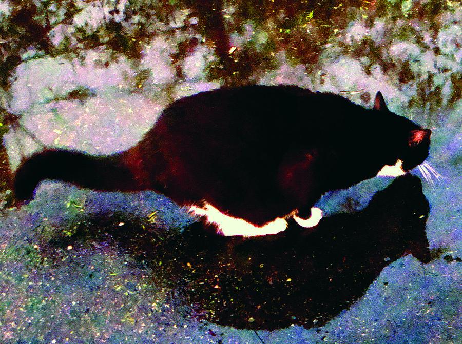 Cat Digital Art - Thirsty Cat by Maz