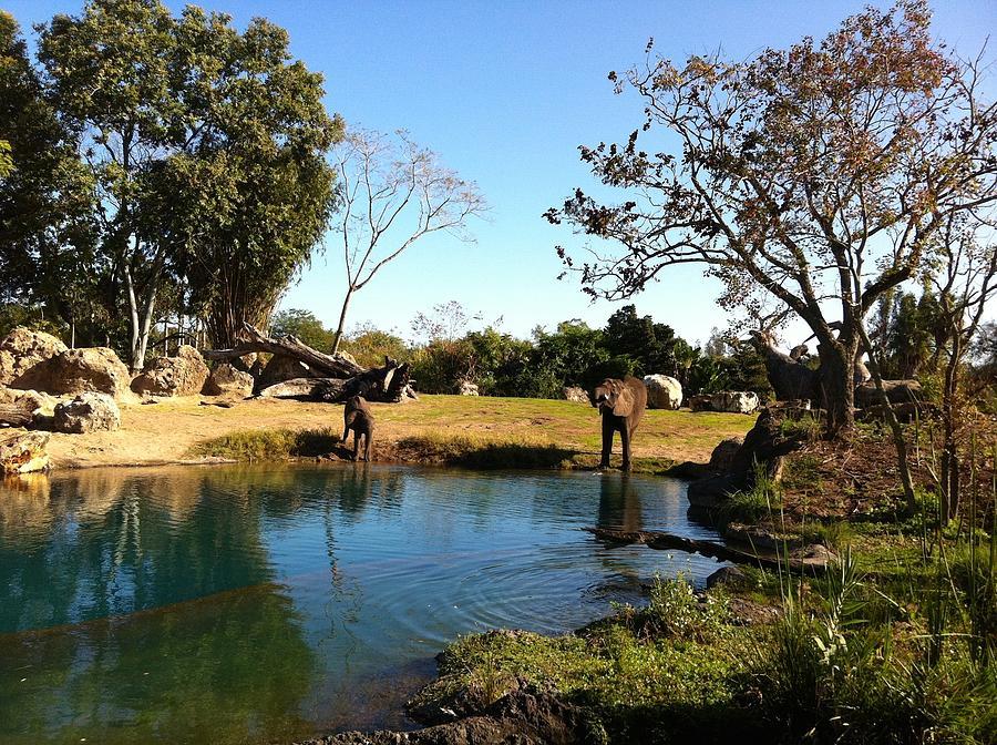 Elephants Photograph - Thirsty by Jennifer Raines