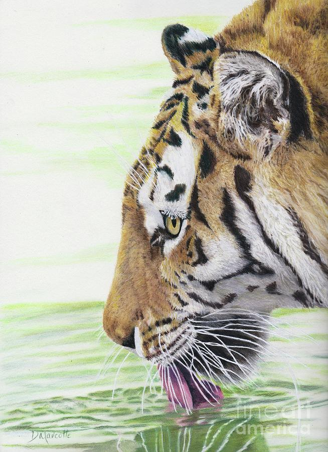 Tiger Painting - Thirsty Tiger by Diane Marcotte