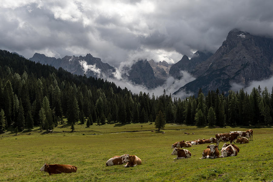 Cow Photograph - This Is A Cows World by Wim Slootweg