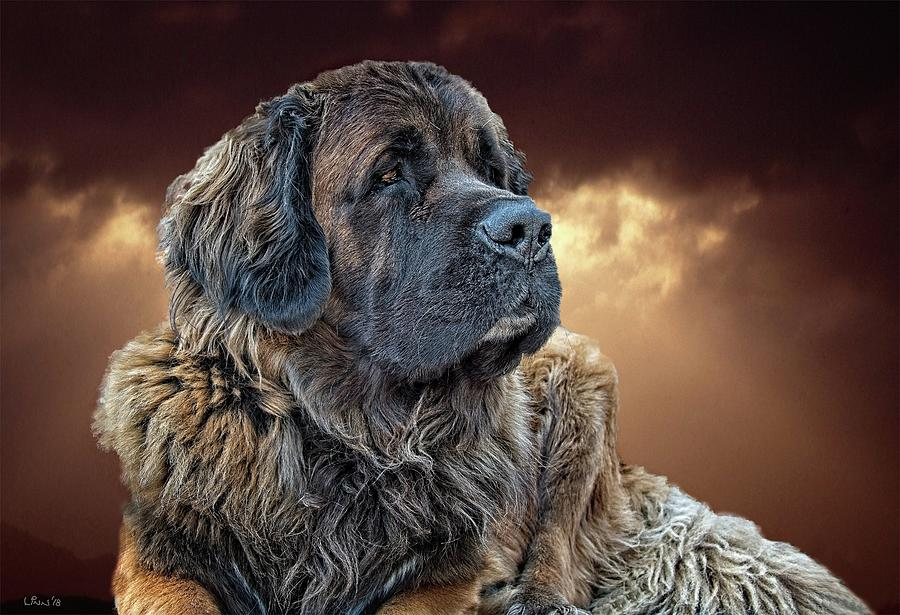 Dog Photograph - This is Grizz by Bill Linn