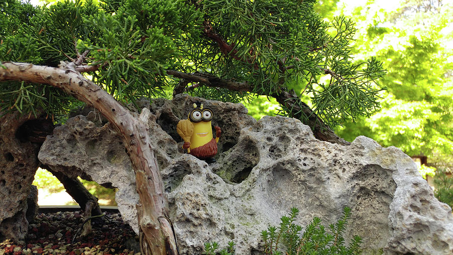 Bonsai Photograph - This Is My Rock by Liza Eckardt