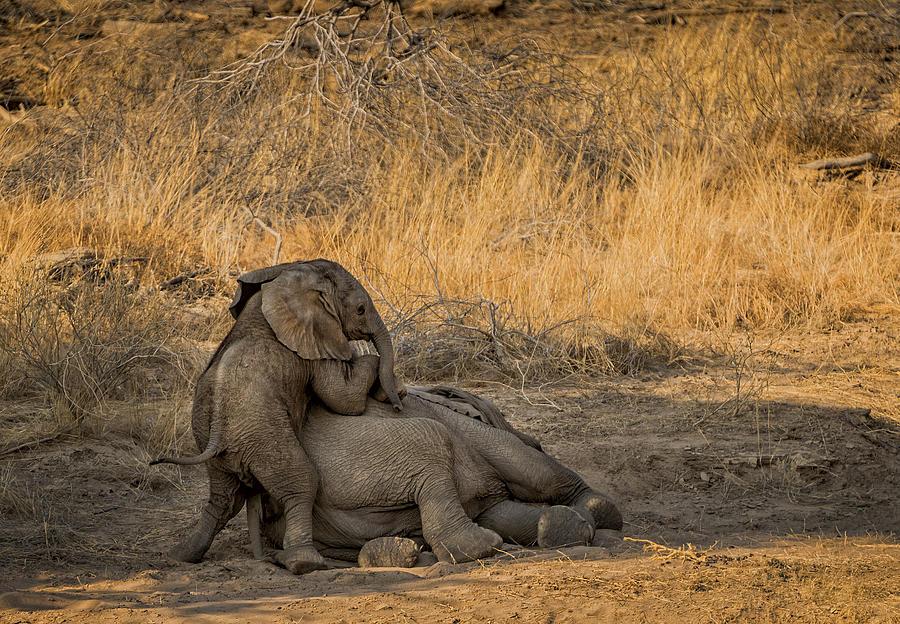 Etosha Photograph - This Is Namibia No.  4 - Come On Bro I Wanna Play by Paul W Sharpe Aka Wizard of Wonders