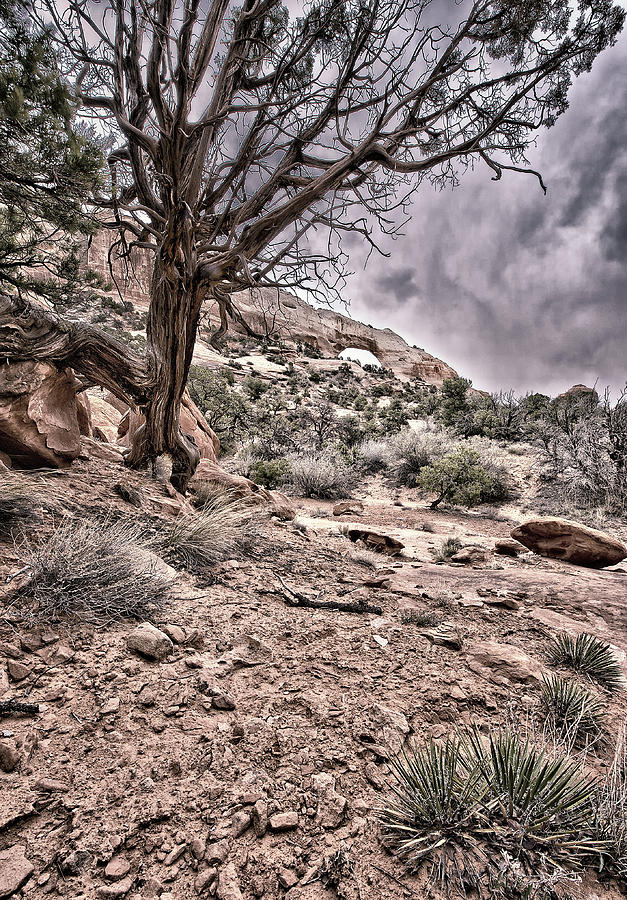 Morning Photograph - This Is Utah No. 9 - Morning At Williams Arch by Paul W Sharpe Aka Wizard of Wonders