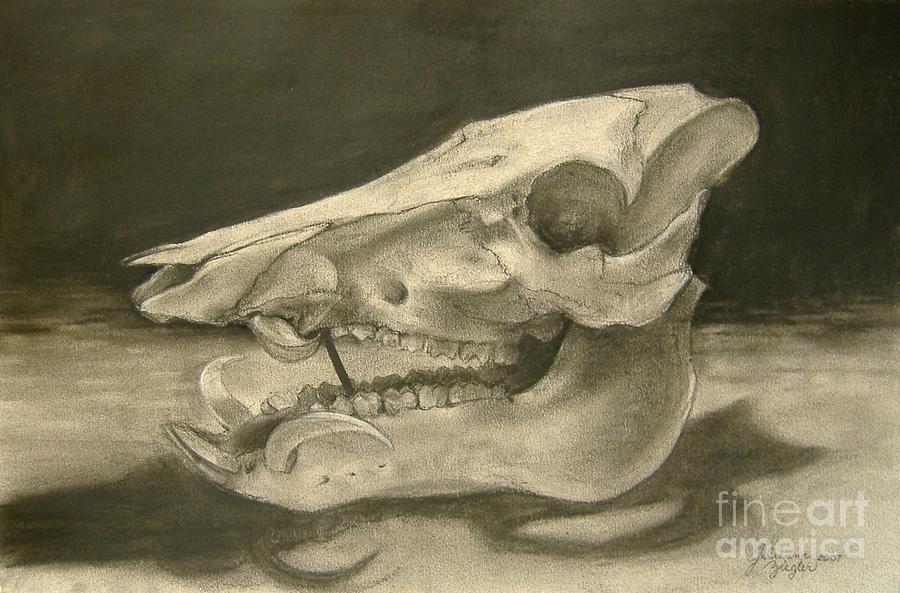 Pig Skull Drawing - This Little Piggy by Julianna Ziegler