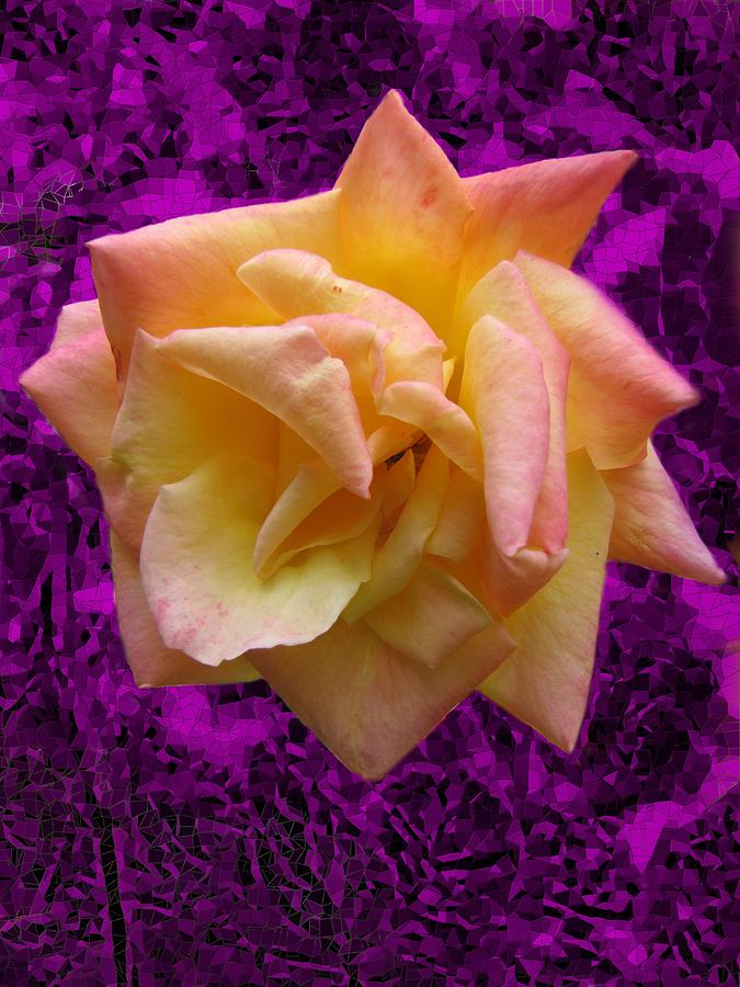 Rose Digital Art - This Rose For You by Tim Allen