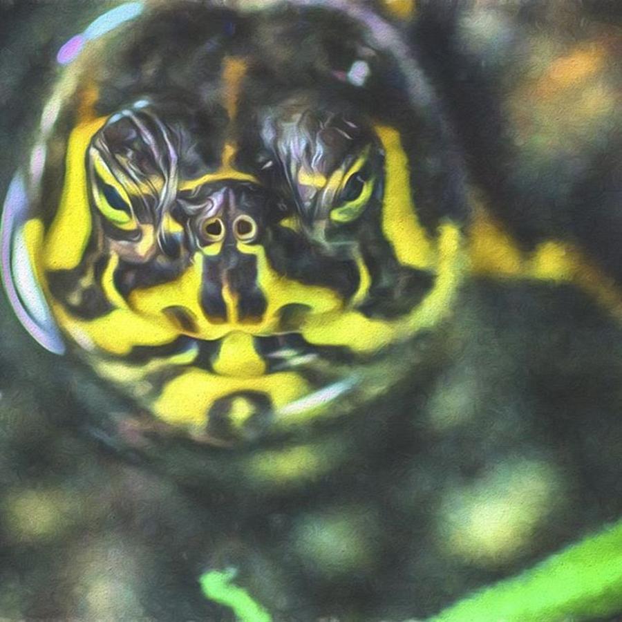 Turtle Photograph - This Tortoise Looks Serious. Hmmm by David Haskett II