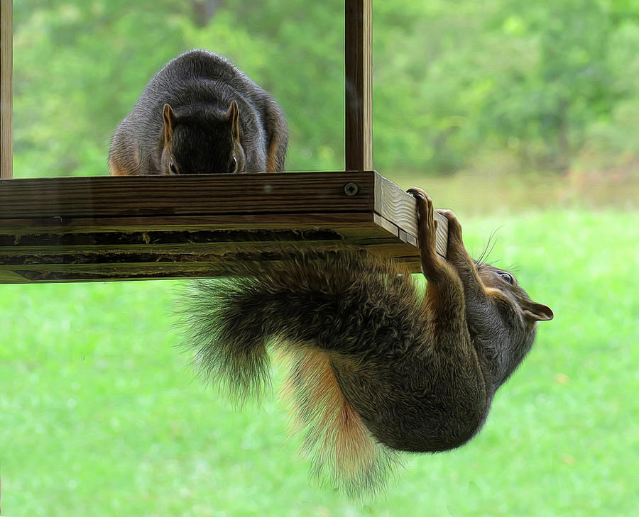 Animals Photograph - This Was A Bad Idea by Carolyn Fletcher