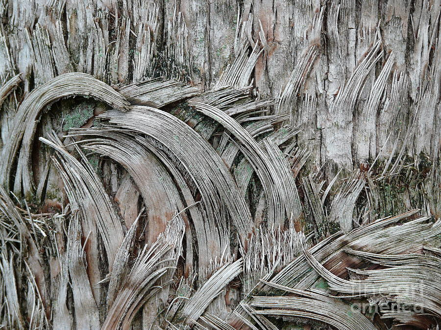 Abstract Photograph - This Way n That by Donna McLarty