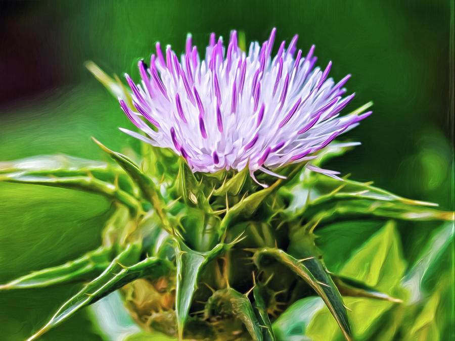 Thistle Time Digital Art by Doctor MEHTA