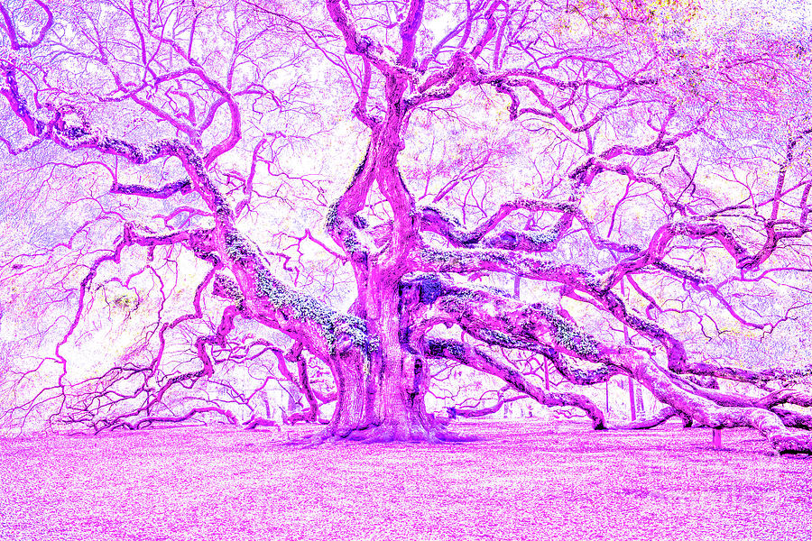 Think Pink Photograph