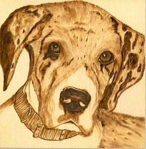 Great Dane Puppy Pyrography - Thor - Great Dane Puppy by Danette Smith