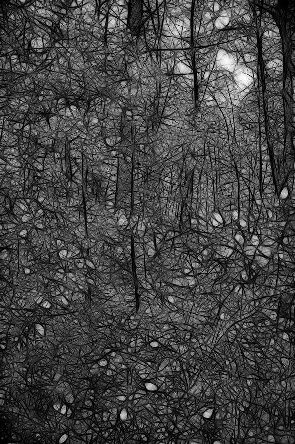 Thoreau Photograph - Thoreau Woods Black And White by Lawrence Christopher