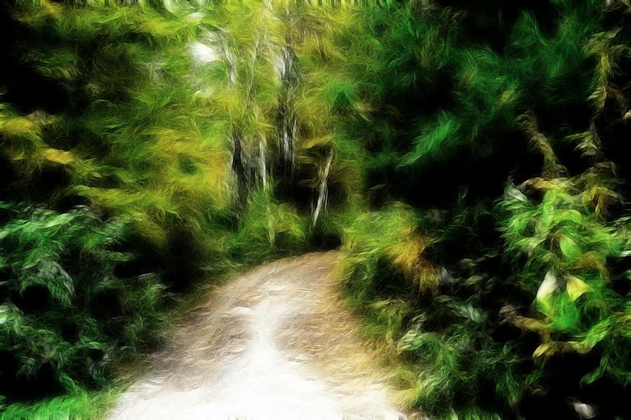 Thoreau Photograph - Thoreau Woods by Lawrence Christopher