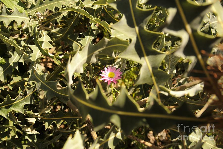Flowers Photograph - Thorn Love by Oscar Moreno