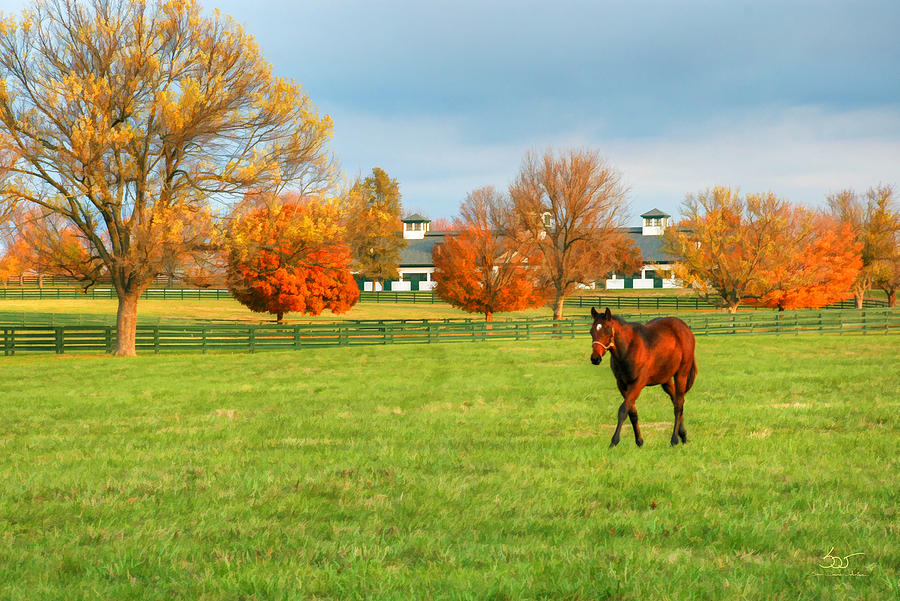 Thoroughbred in Fall by Sam Davis Johnson