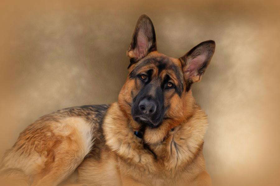 Dogs Photograph - Those Eyes by Sandy Keeton
