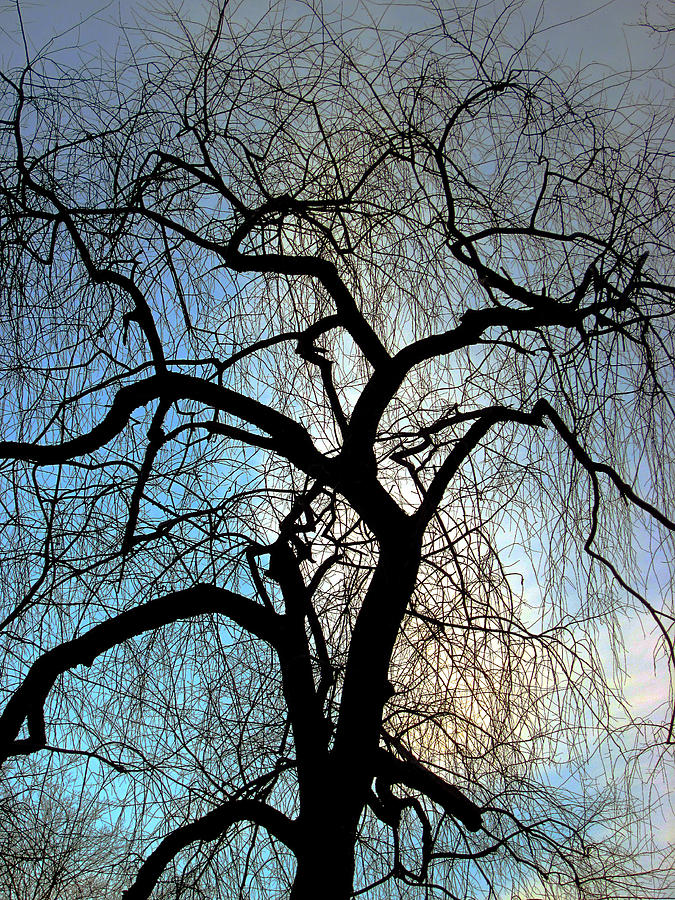 Those Gnarled Branches Photograph by Guy Ricketts