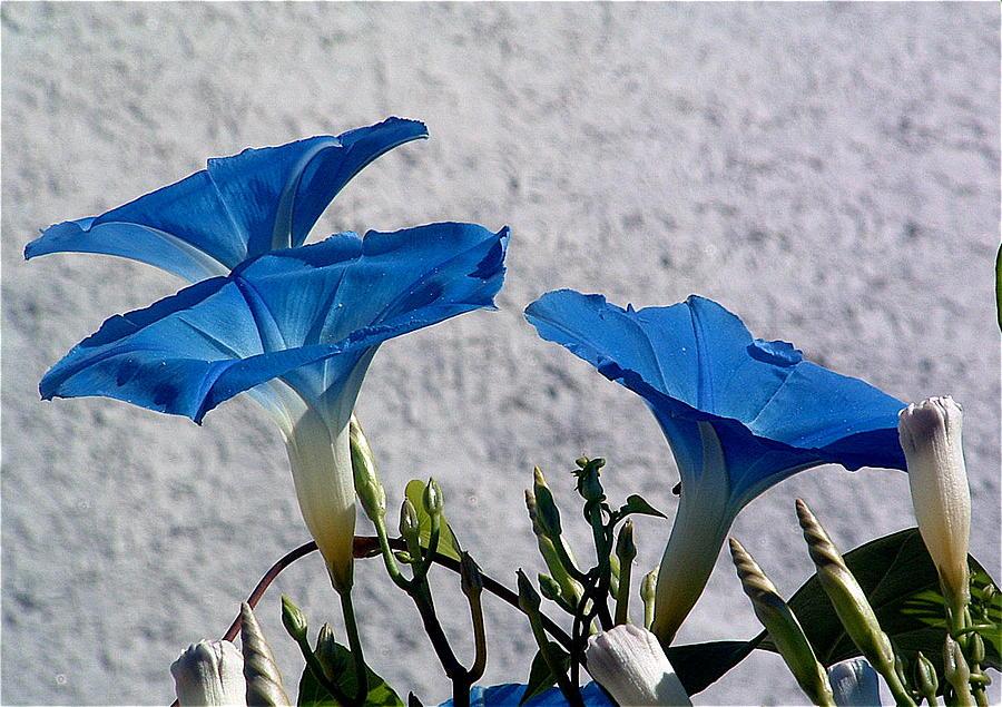 Floral Photograph - Three Amigos by john Kuti