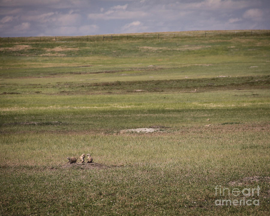 Prairie Dogs Photograph - Three Amigos by Sandy Adams