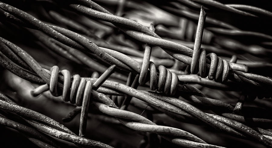 Barbed Wire Photograph - Three Barbs In Black And White by Greg and Chrystal Mimbs
