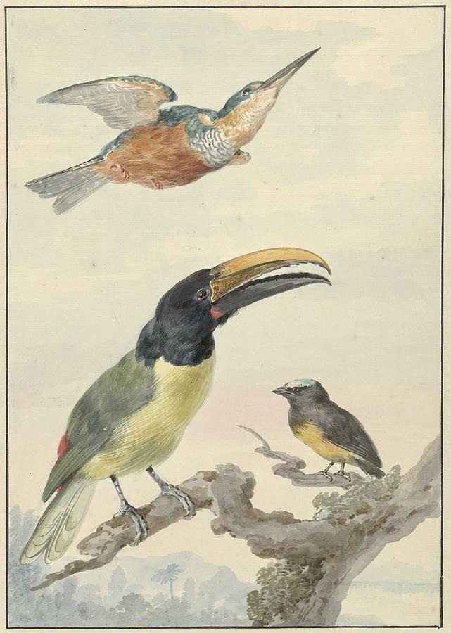Three Birds A Kingfisher, A Prince Of Wieds Toucan And An Organist, Aert Schouman, 1720 - 1792 G Painting