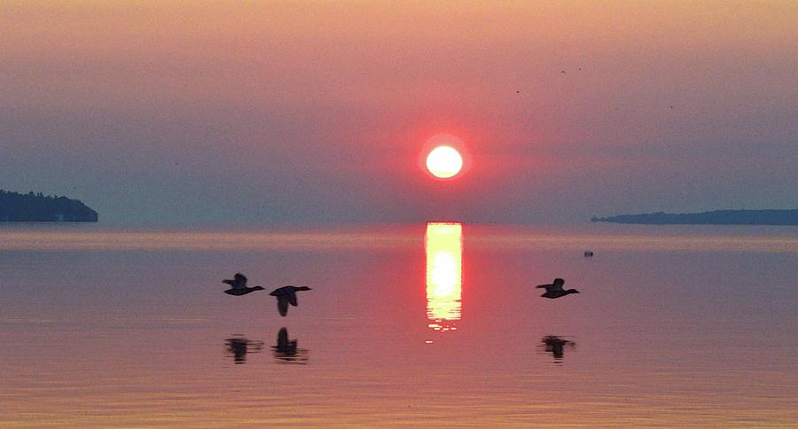 Abstract Photograph - Three Geese Flying By The Sunrise  by Lyle Crump
