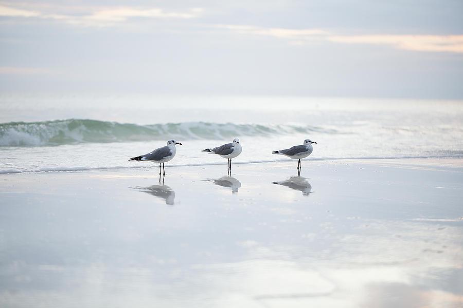 Seagulls Photograph - Three Gulls by Deon Grandon