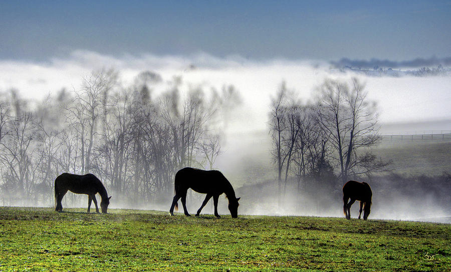 Three Horse Morning by Sam Davis Johnson