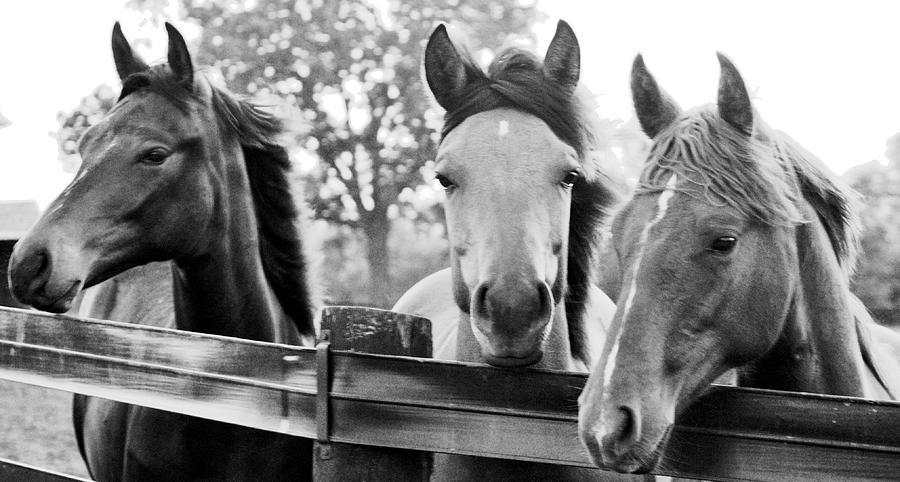 Farm Photograph - Three Horses by Brian Foxx