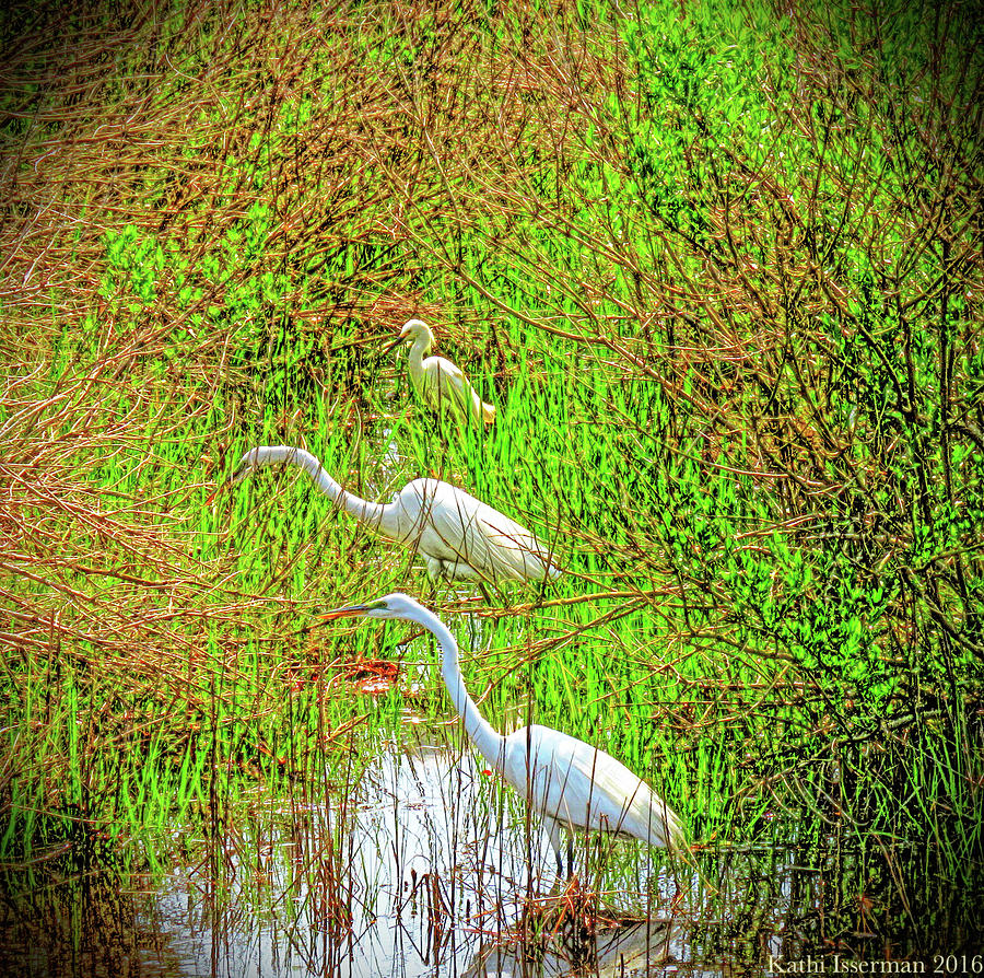 Chincoteague Island Photograph - Three In A Row by Kathi Isserman