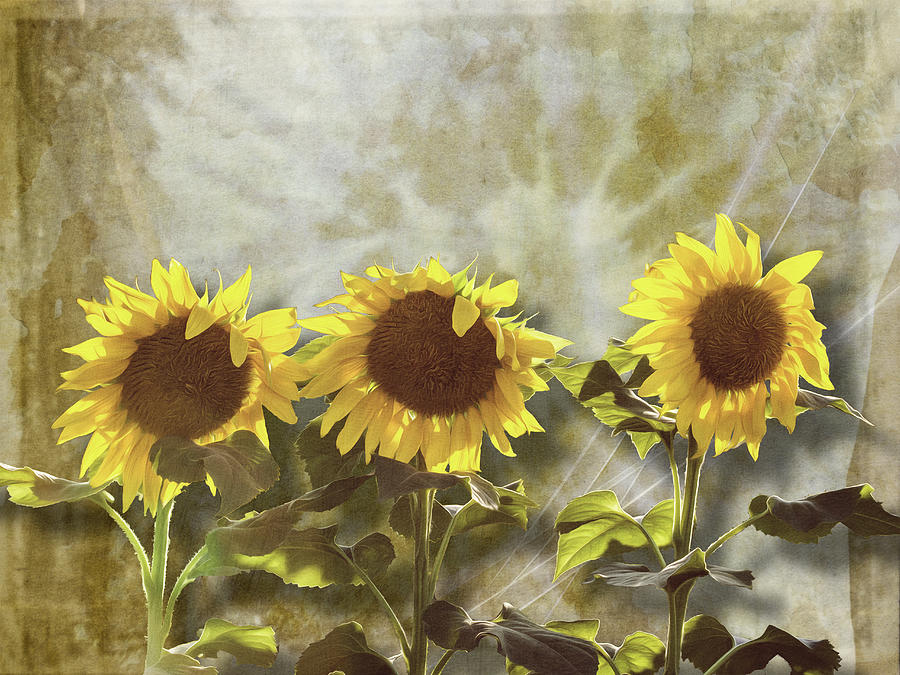 Three in the Sun by Melinda Ledsome