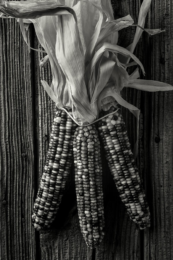 Indian Photograph - Three Indian Corn In Black And White by Garry Gay