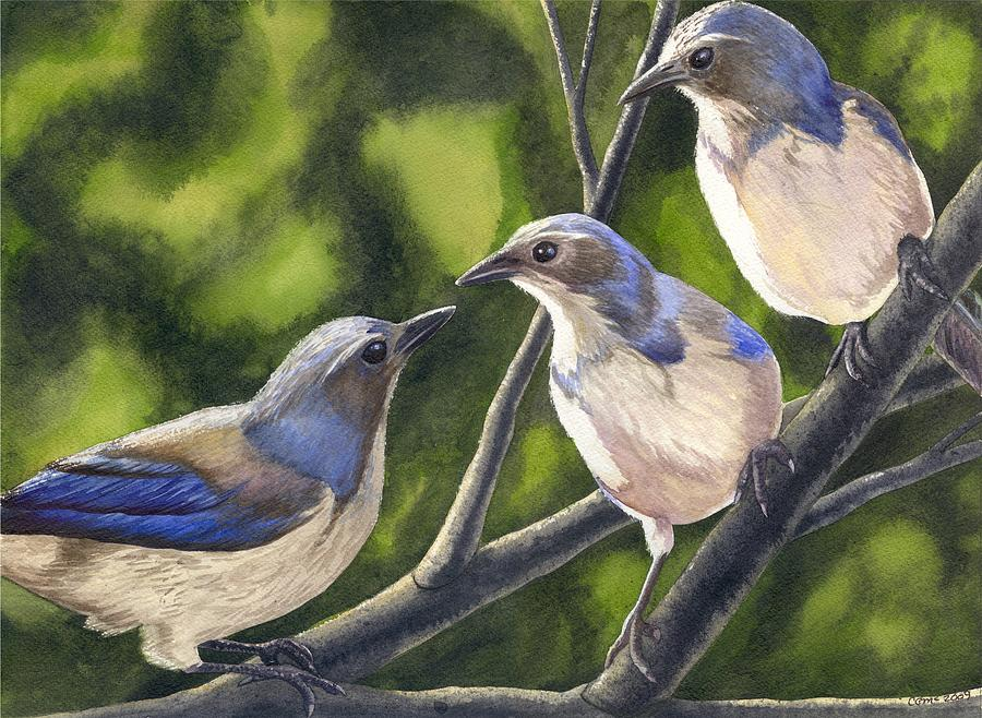 Birds Painting - Three Jays by Catherine G McElroy