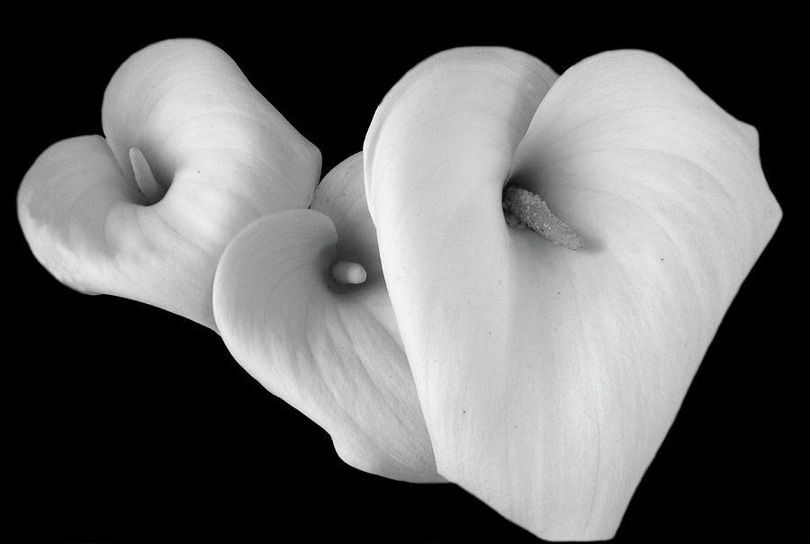 Three Lilies On Black Background by Aidan Moran