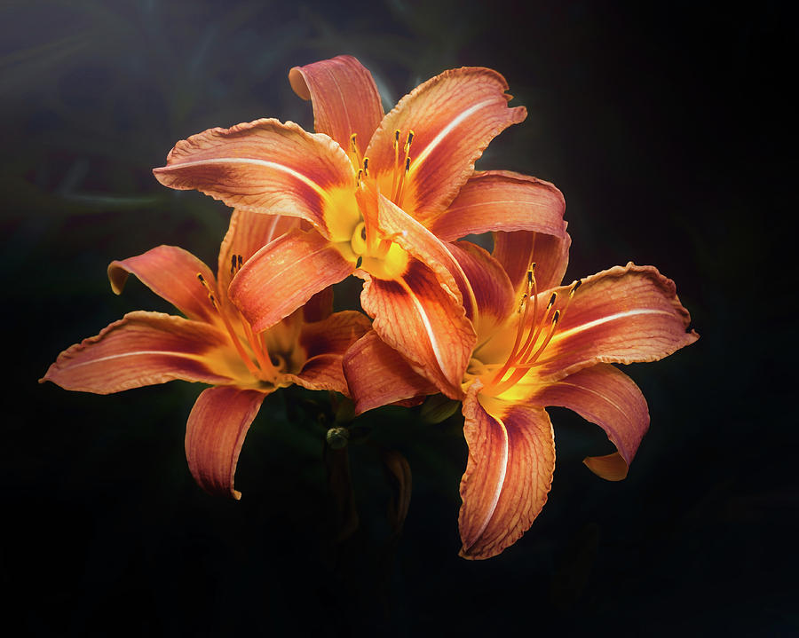 Lily Photograph - Three Lilies by Scott Norris