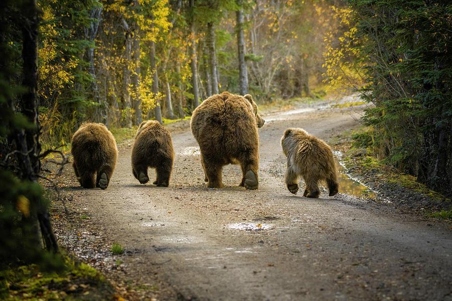 Alaska Photograph - Bear Bums by Chad Dutson