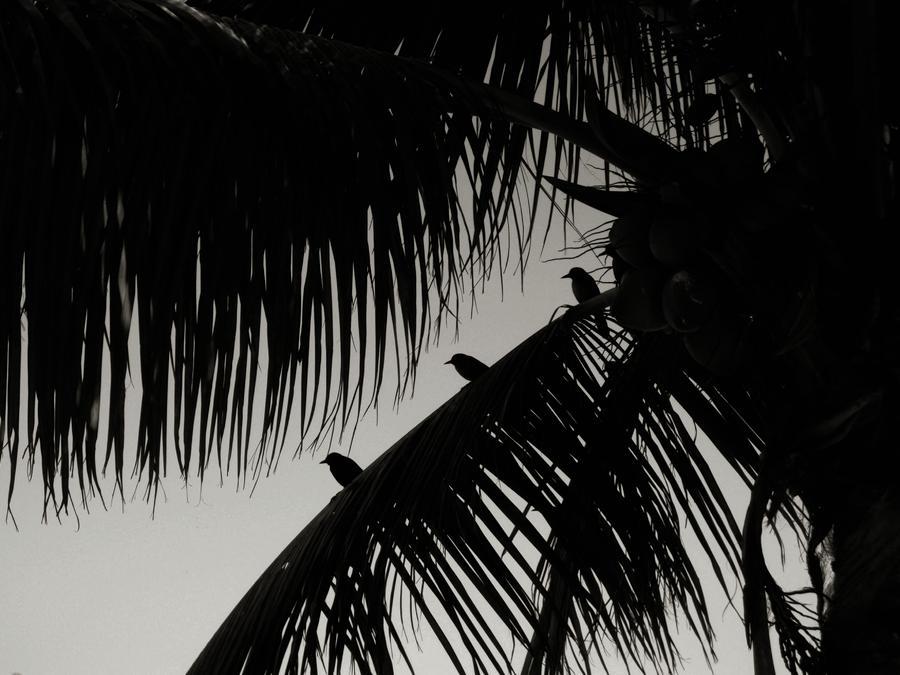 Bird Photograph - Three Little Birdies by JAMART Photography