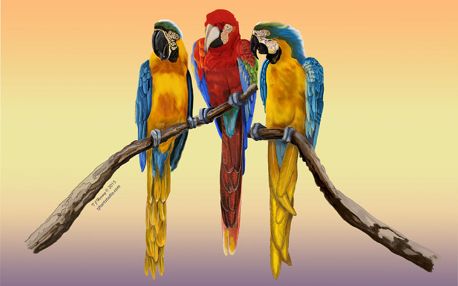 Three Macaws Hanging Out by Thomas J Herring