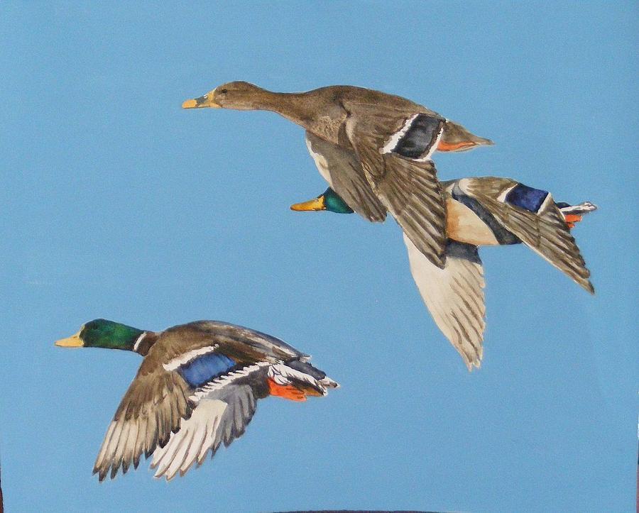 Blue Painting - Three mallards by Diane Ziemski
