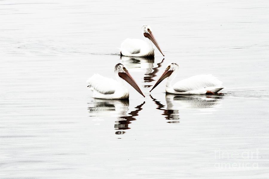 Three of a Kind Photograph by Jennie MacDonald