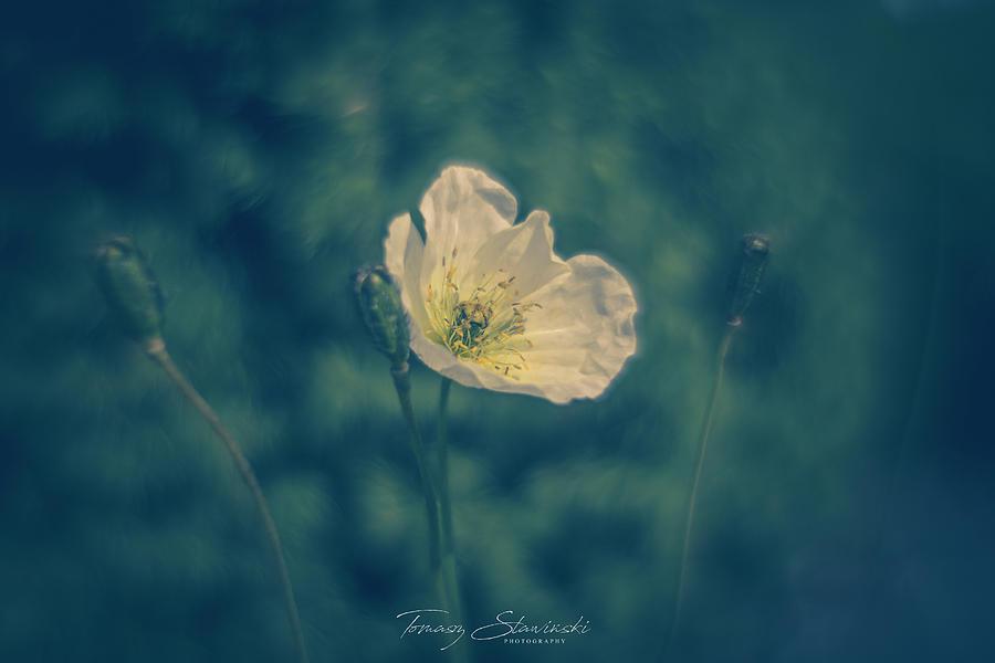 Flowers Photograph - Three of them by Tomasz Slawinski