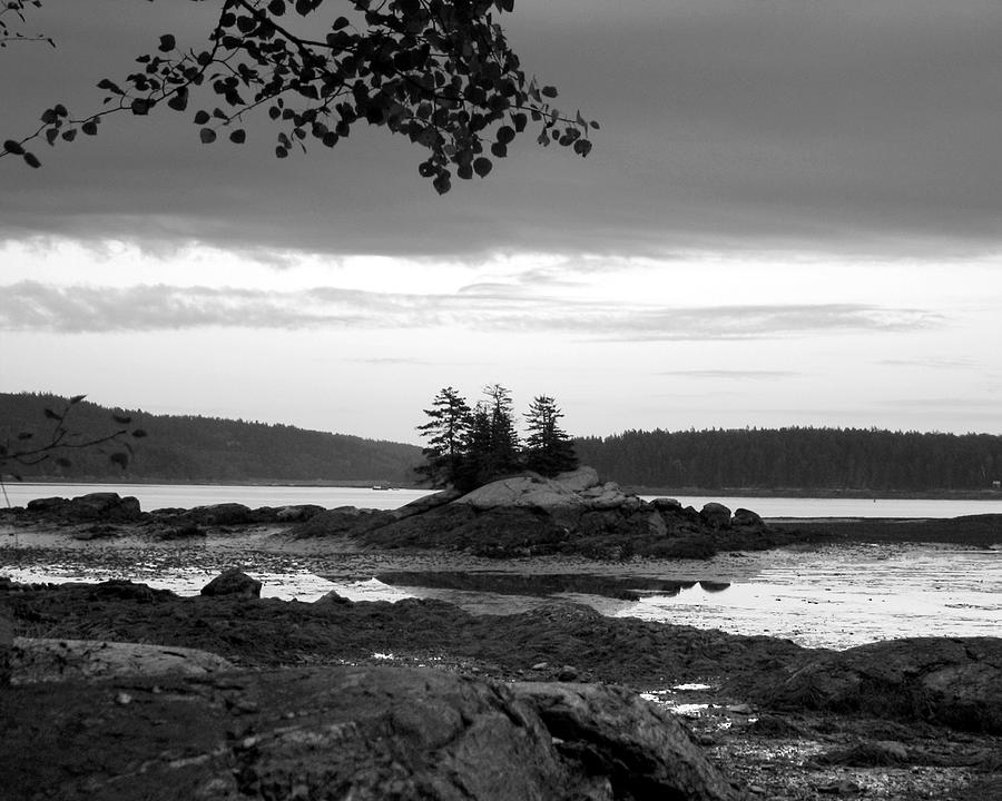 Landscape Photograph - Three Pine Island by Joe Maranzano