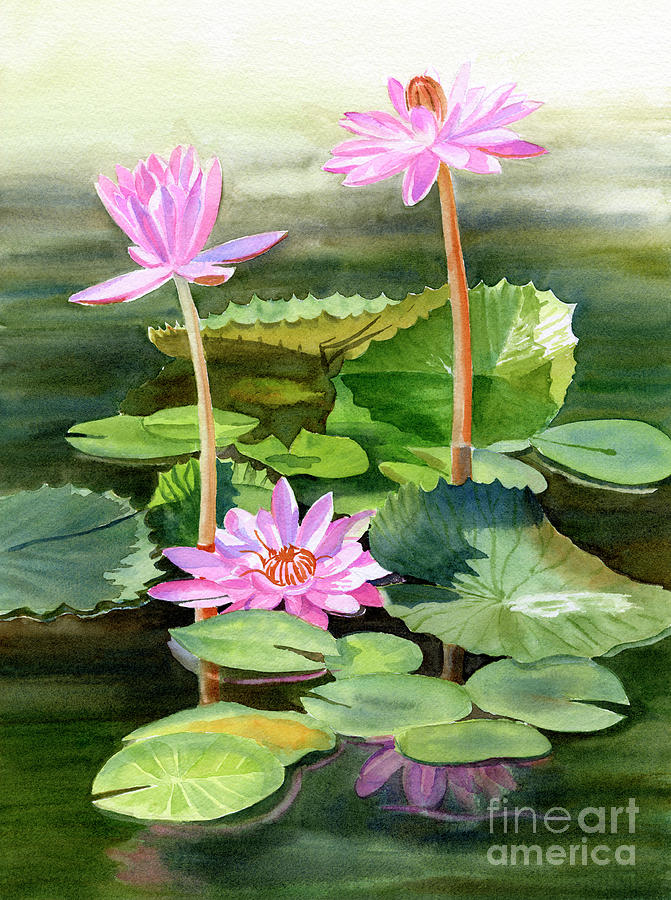 Pink Painting - Three Pink Water Lilies with Pads by Sharon Freeman
