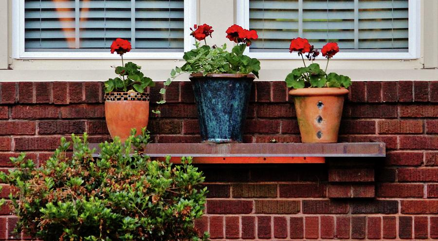 Red Photograph - Three Potted Flowers by Cynthia Guinn