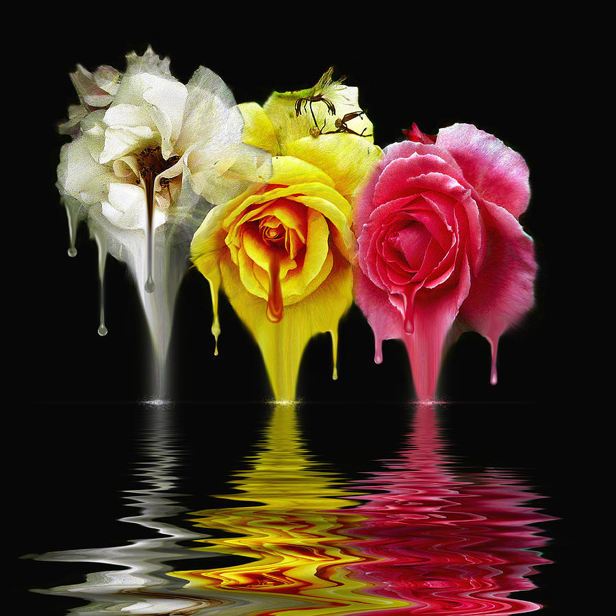 Water Digital Art - Tears Of Roses by Gordon Engebretson