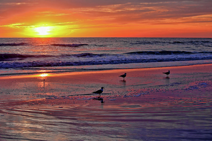 Seascape Photograph - Three Seagulls On A Sunset Beach by HH Photography of Florida